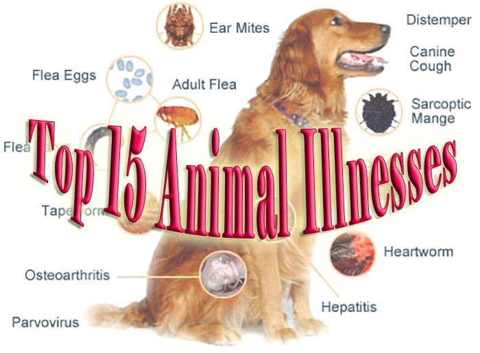 The Top 15 Animal Illnesses That Can Cripple or Kill Your Pets. Blastomycosis in Dogs Is One of Them